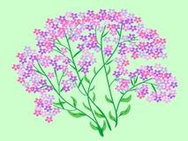 Ramalhete cor-de-rosa das flores dos wildflowers Imagem de Stock Royalty Free