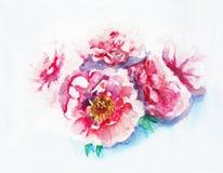 Ramalhete cor-de-rosa das peônias A mão da aquarela afoga a ilustração Imagem de Stock