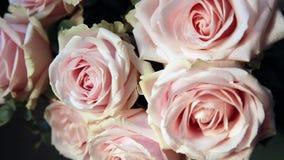 Ramalhete cor-de-rosa das rosas video estoque