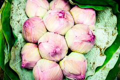 Ramalhete cor-de-rosa do botão de Lotus Foto de Stock Royalty Free