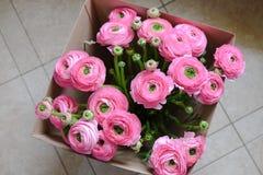 Ramalhete cor-de-rosa do ranúnculo em uma caixa de cartão no assoalho Vista superior Para a entrega da flor, meios sociais Foco s imagem de stock