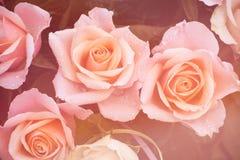 Ramalhete cor-de-rosa sonhador cremoso das rosas Fotos de Stock