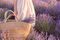Ramalhete da alfazema em um saco de vime no por do sol do campo da alfazema foto de stock
