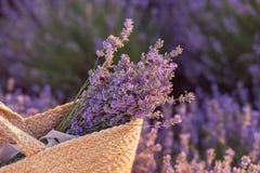 Ramalhete da alfazema em um saco de vime no por do sol do campo da alfazema fotografia de stock