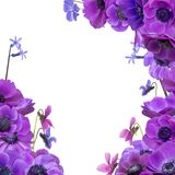 Ramalhete da anêmona com quadro Foto de Stock Royalty Free