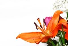 Ramalhete da flor alaranjada no branco Imagens de Stock