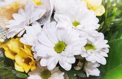 Ramalhete da flor branca do crisântemo Foto de Stock Royalty Free