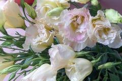 Ramalhete da flor de flores de corte grandiflorum-frescas de Platycodon Fotos de Stock Royalty Free