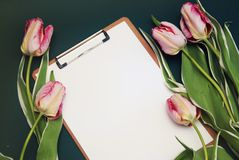 Ramalhete da flor de Tulip Pink e cartão vazio do Livro Branco no fundo azul do adark com espaço da cópia Configuração lisa Imagem de Stock Royalty Free