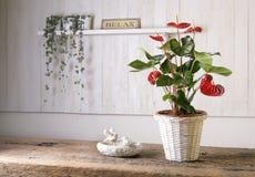 Ramalhete da flor do feriado em uma casa de madeira rústica da exploração agrícola Imagem de Stock