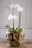 Ramalhete da flor do feriado em uma casa de madeira rústica da exploração agrícola Fotografia de Stock Royalty Free