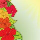 Ramalhete da flor do verão Foto de Stock Royalty Free