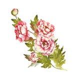 Ramalhete da imagem das peônias Ilustração da aquarela da tração da mão Fotos de Stock
