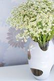 Ramalhete da margarida Foto de Stock
