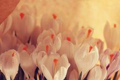 Ramalhete da mola das flores Imagem de Stock