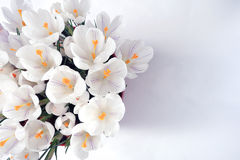 Ramalhete da mola das flores Imagens de Stock