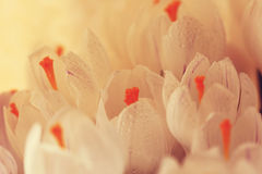 Ramalhete da mola das flores Fotografia de Stock Royalty Free