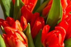 Ramalhete da mola de tulipas alaranjadas imagens de stock