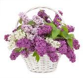 Ramalhete da mola Lírio do vale e do lilás em um isolado da cesta foto de stock