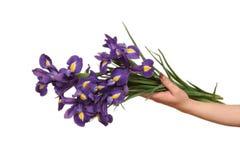 Ramalhete das íris nas mãos fêmeas Imagem de Stock Royalty Free