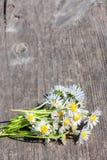 Ramalhete das camomilas Fotografia de Stock