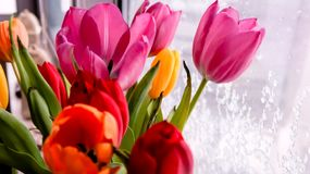 Ramalhete das flores da tulipa que estão na janela no dia de inverno fotografia de stock
