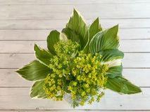 Ramalhete das flores de anfitriões do musgo e das folhas Imagens de Stock