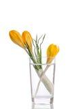 Ramalhete das flores do açafrão no vaso Imagens de Stock