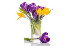 Ramalhete das flores do açafrão no vaso Imagem de Stock Royalty Free
