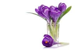 Ramalhete das flores do açafrão no vaso Foto de Stock