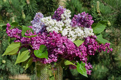 Ramalhete das flores do lilac Fotos de Stock