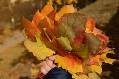 Ramalhete das folhas de outono coloridas à disposição Fotos de Stock