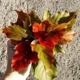 Ramalhete das folhas de outono em uma mão fêmea fotos de stock