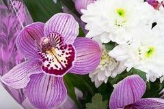 Ramalhete das orquídeas e dos crisântemos isolados sobre Foto de Stock