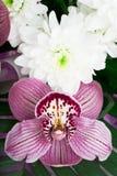Ramalhete das orquídeas e dos crisântemos isolados sobre Imagens de Stock Royalty Free
