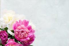 Ramalhete das peônias no fundo cinzento Fundo floral Fotografia de Stock Royalty Free