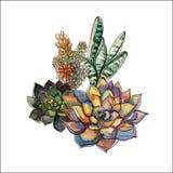 Ramalhete das plantas carnudas Arranjo de flor para o projeto watercolor gráficos Vetor ilustração do vetor