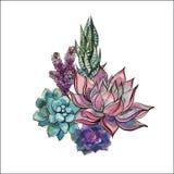 Ramalhete das plantas carnudas Arranjo de flor para o projeto watercolor gráficos Vetor ilustração stock
