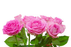 Ramalhete das rosas Fotografia de Stock Royalty Free