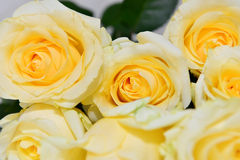 Ramalhete das rosas amarelas foto de stock royalty free