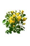 Ramalhete das rosas amarelas isolado no fundo branco Fotos de Stock Royalty Free