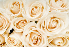 Ramalhete das rosas brancas imagens de stock royalty free
