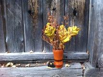 Ramalhete das rosas feitas das folhas de bordo em um fundo de madeira cinzento velho Foto de Stock Royalty Free