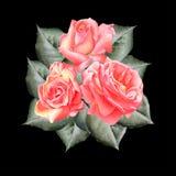 Ramalhete das rosas no fundo preto Imagens de Stock