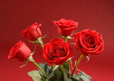 Ramalhete das rosas no fundo vermelho Fotografia de Stock