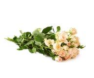 Ramalhete das rosas sobre o fundo isolado branco Fotografia de Stock Royalty Free