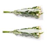 Ramalhete das rosas sobre o fundo isolado branco Fotografia de Stock