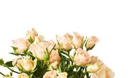Ramalhete das rosas sobre o fundo isolado branco Fotos de Stock Royalty Free