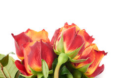 Ramalhete das rosas sobre o fundo isolado branco Fotos de Stock