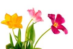 Ramalhete das tulipas Imagem de Stock